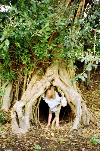 Tree Hobbit by ring wood.