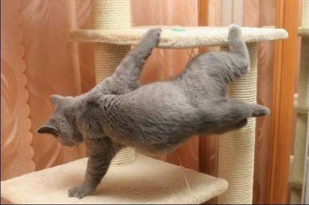funny_cats_59 (601x399, 82Kb)