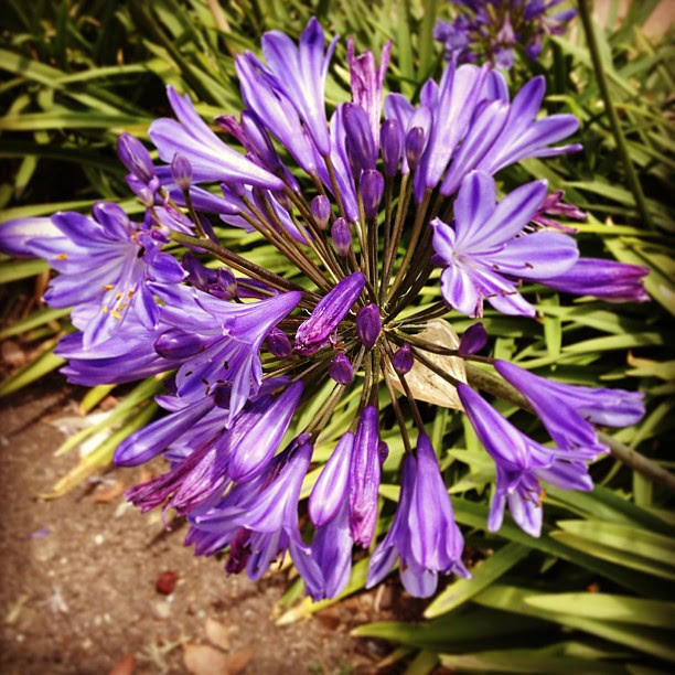 Day203 Visited the Santa Barbara Botanical Garden today! 7.22.13 #jessie365