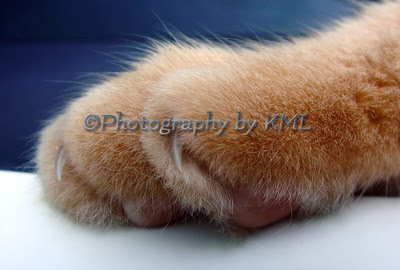 furry cat paw with claws