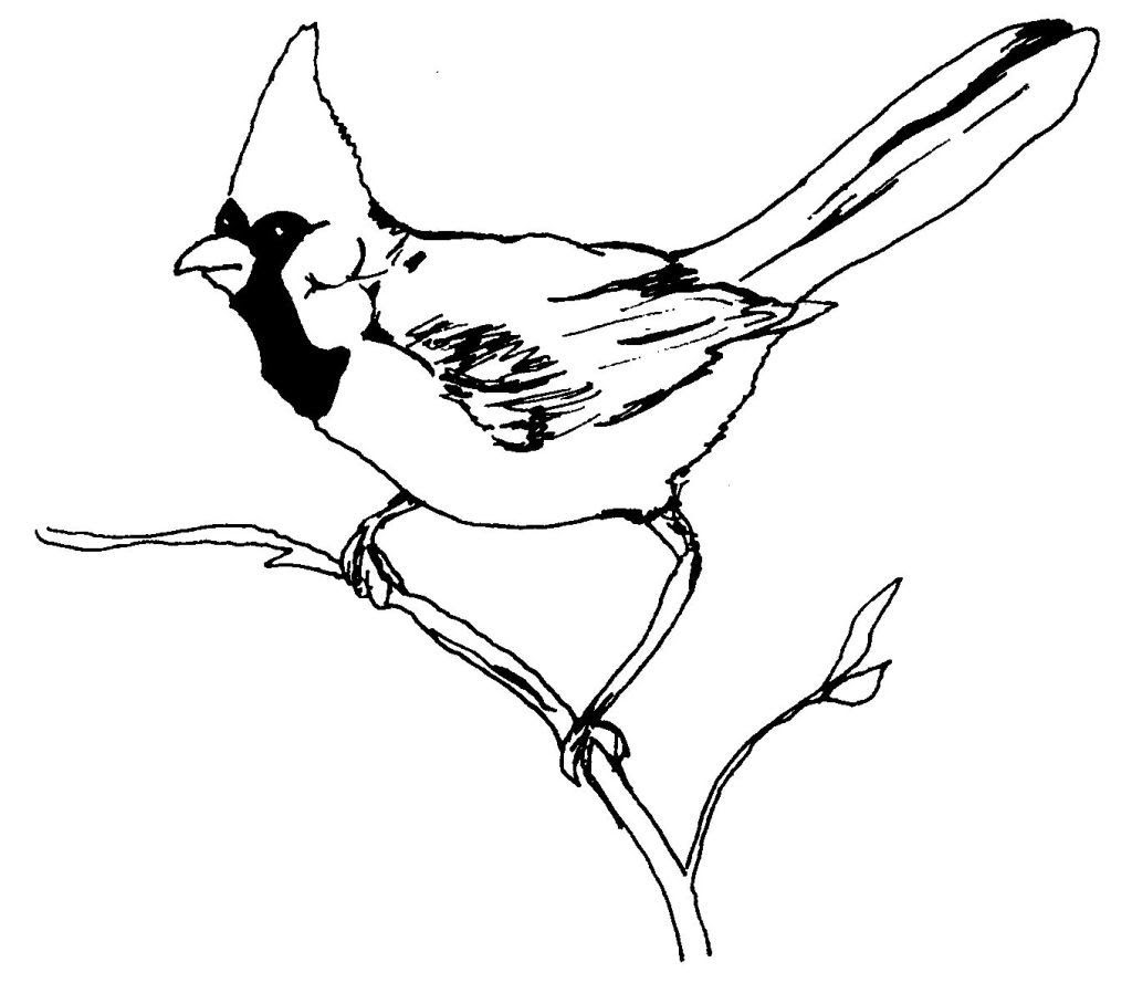 Dessin coloriage animal oiseau cardinal