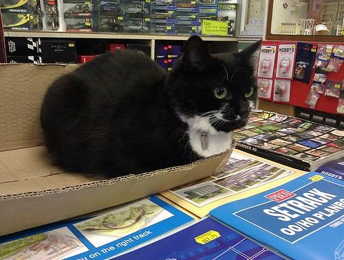 ModelShop Cat