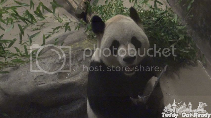 Panda Toronto