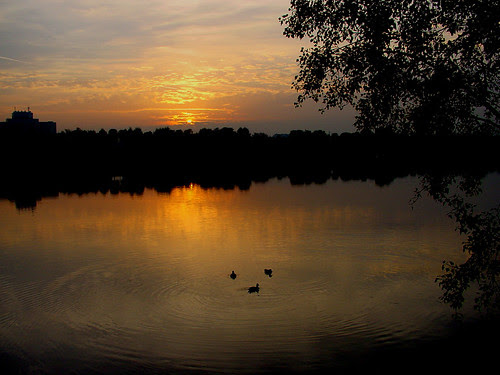 duck sunset2