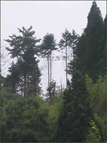100730 missing trees