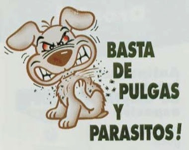 Resultado de imagen para perros con pulgas