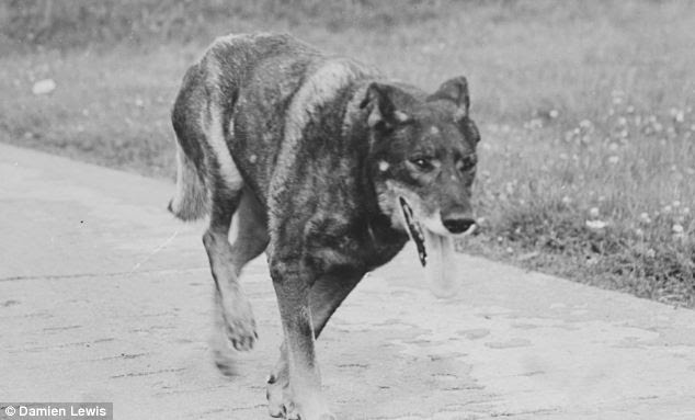 Antis was a puppy when Robert rescued him from a French farmhouse, and soon became the mascot of 311 Squadron. He was trained never to cross the runway