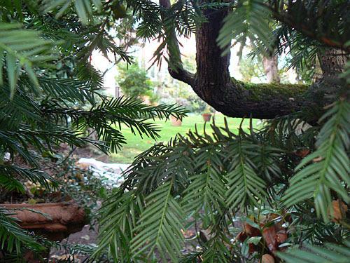 jardin chelsea 1.jpg