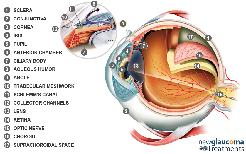 Parts of the Eye Glaucoma