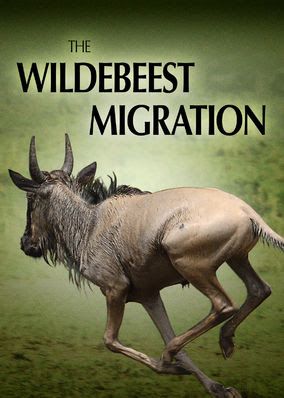 Wildebeest Migration, The