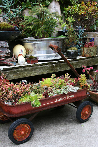 radio flyer and succulents