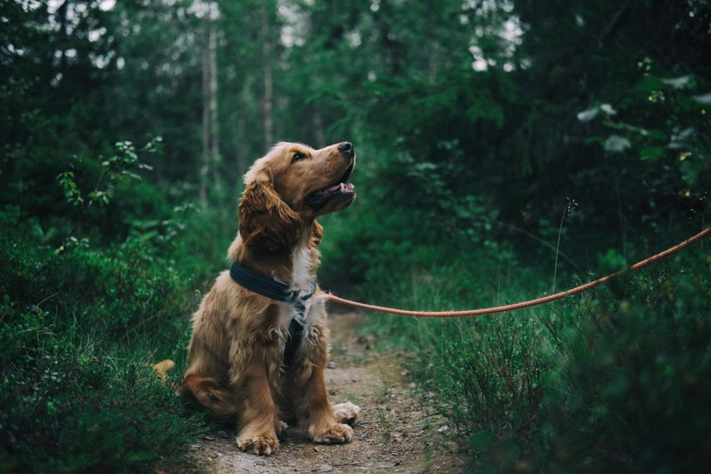 How to Be a Great Pet Owner When You've Never Done It Before