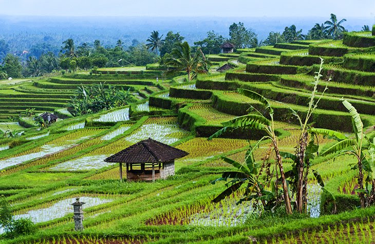 Jatiluwih Green Land Bali Map,Things to do in Bali Island,Tourist Attractions in Bali,Map of Jatiluwih Green Land Bali,Jatiluwih Green Land Bali accommodation destinations attractions hotels map reviews photos pictures