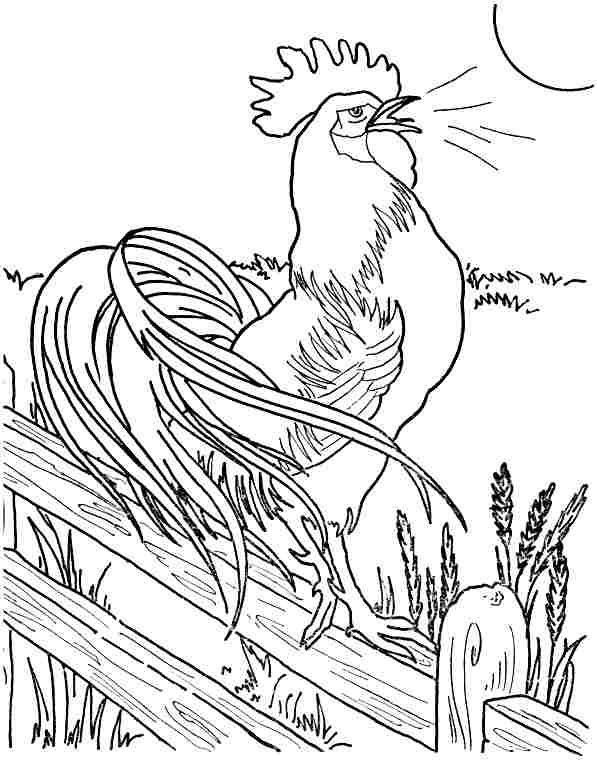 7 Best Images of Printable Pictures Of Roosters  Printable Rooster Coloring Page, Rooster