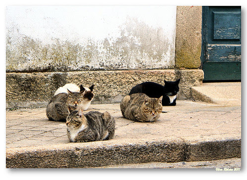 5 cats #2 by VRfoto