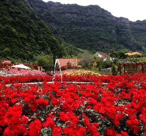 Madeira - roseiral