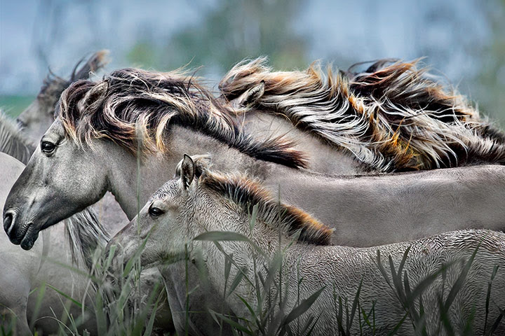 NHM Book: The Masters of Nature Photography : JIM BRANDENBURG HORSE SPIRIT