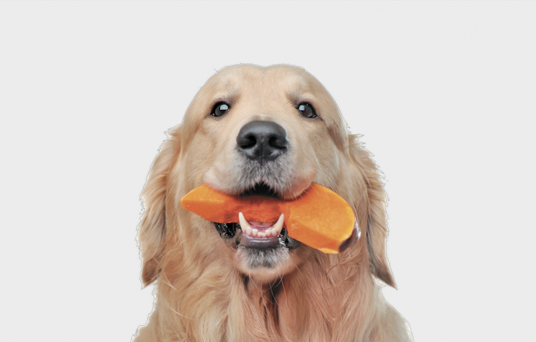 your dog should eat the rainbow