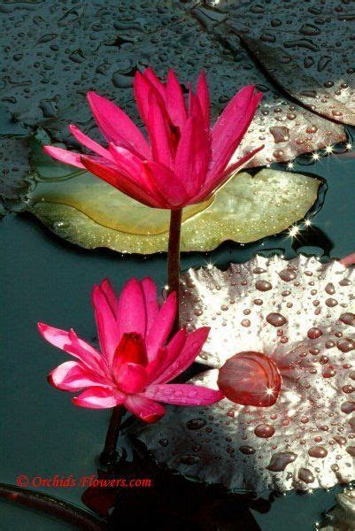 17 Best ideas about Indian Flowers on Pinterest   Indian