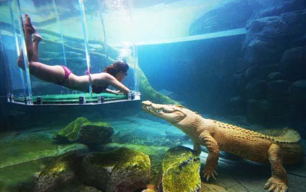 perierga.gr - Κολυμπώντας... παρέα με κροκόδειλους!