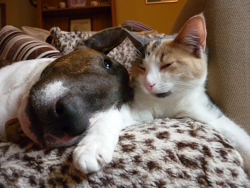 WINSTON THE BULLTERRIER WITH CLEMENTINE