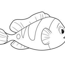 Dibujos Para Colorear Pez De Oceana Eshellokidscom