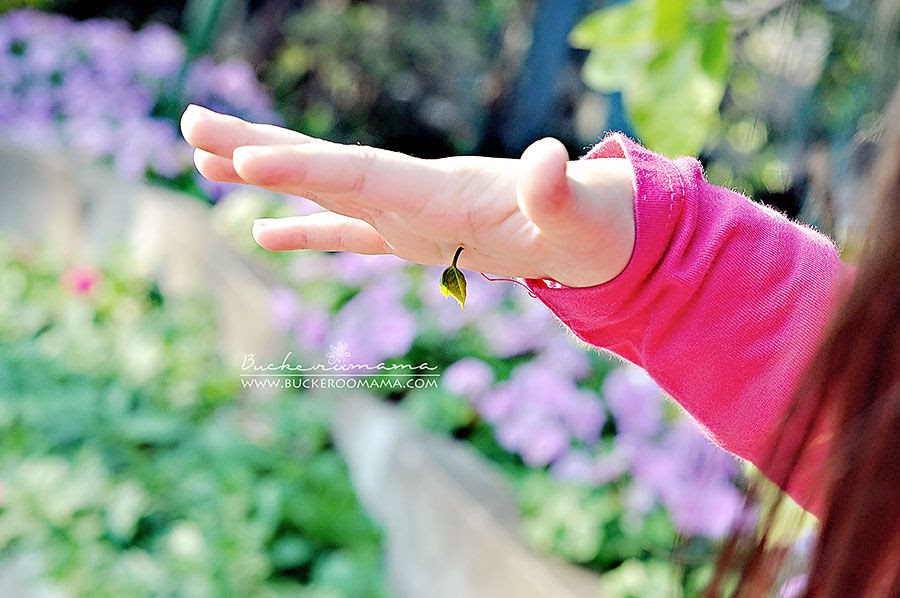 2.10, Look, a leaf grew out of my hand!