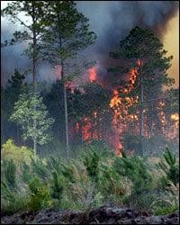 Foto de un incendio forestal