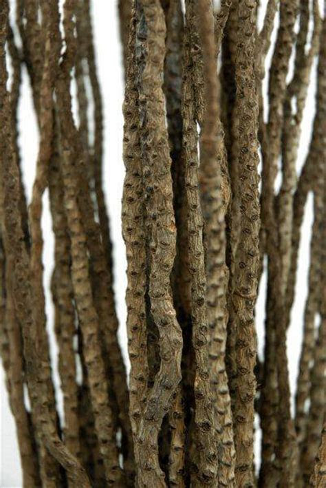 Natural Coco Branches 15in (25 30 branches)
