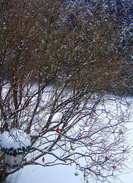Tree: ODC (9 january)