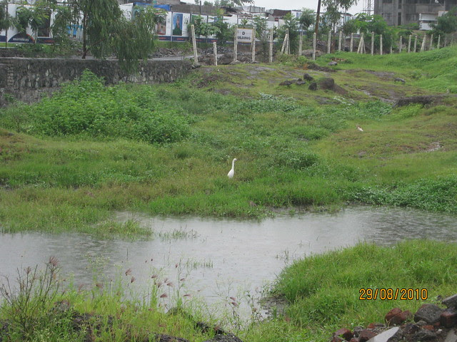 A bird and a pond