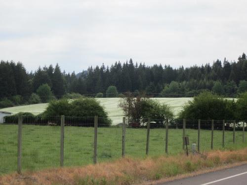 fields of the stuff