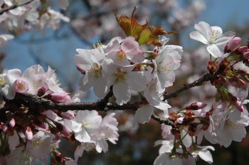 Hoping for Spring
