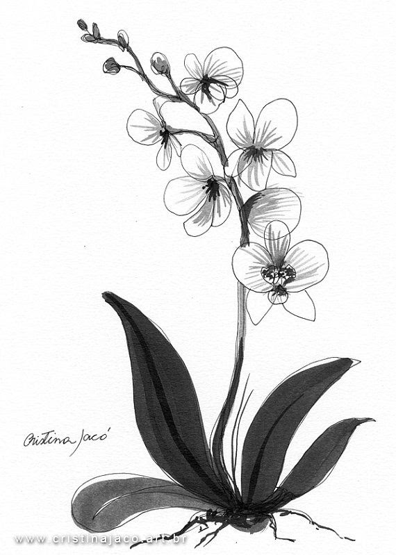 Orchid Flower Tattoo Black And White Flowers Healthy