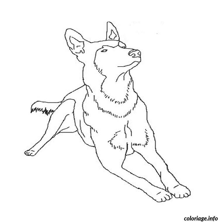 Coloriage Chiot Berger Allemand Jecoloriecom