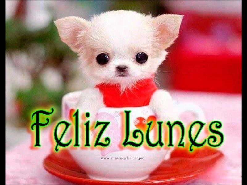 Imagenes De Feliz Lunes Con Rosas Descargar Imagenes Gratis