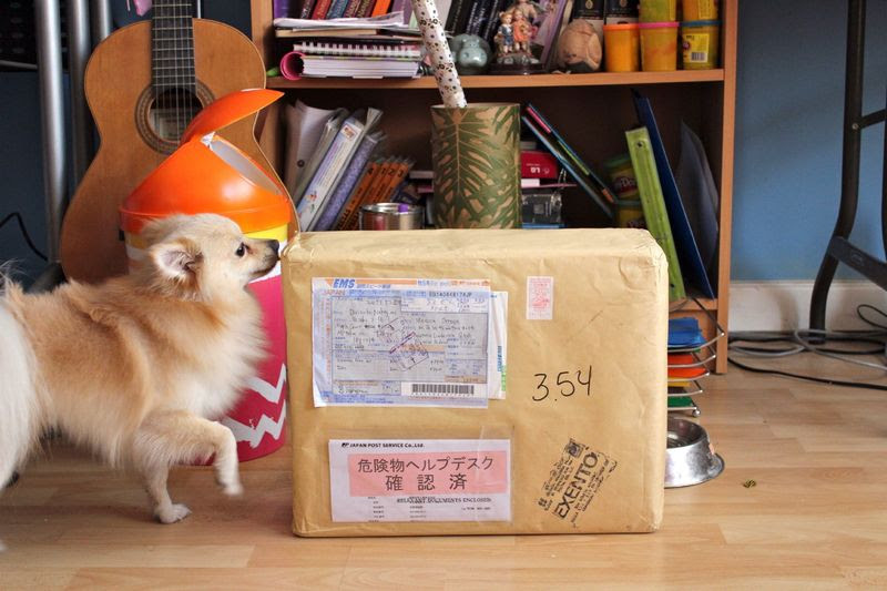 Cute Pomeranian with package by monicutte