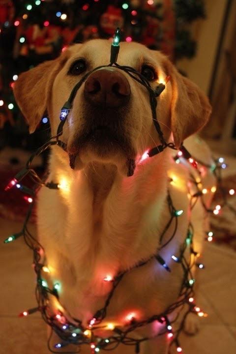 [Momentos de um Por-fora] Luzinhas de Natal