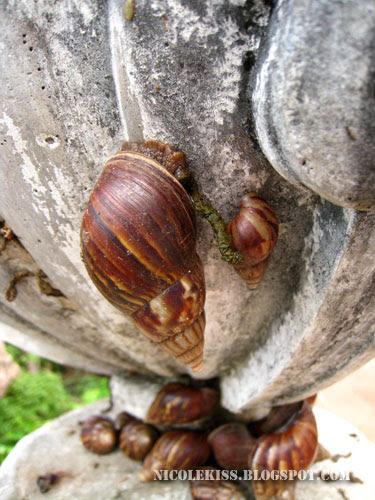 big snail small snail