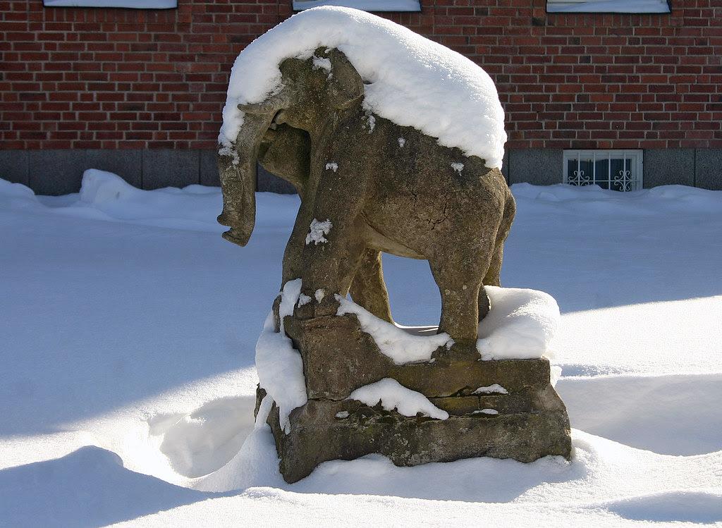 Frozen Elephants