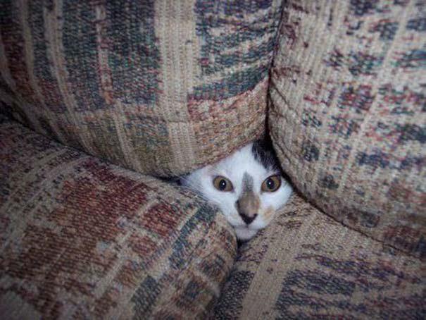 Όταν τα ζώα παίζουν κρυφτό (2)