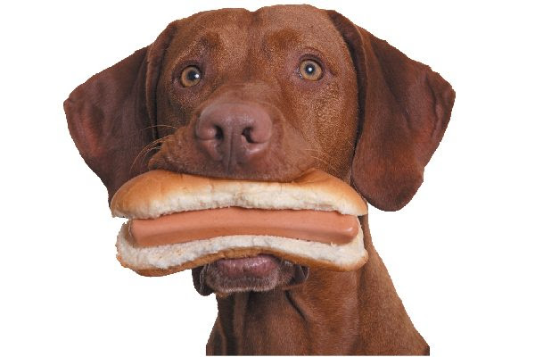 Human Food for Dogs: What Can Dogs Eat?