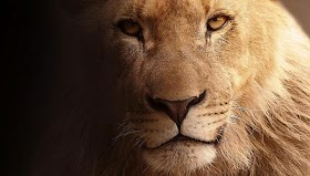 Why the Lion is the King of the Forest?