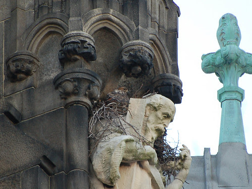 Red-Tailed Hawk in Cathedral Nest