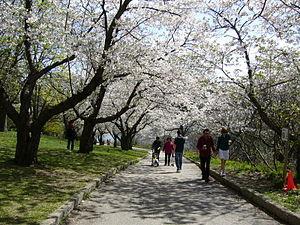 Late spring scene in High Park, in Toronto's w...