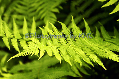 green fern leaves in the spring