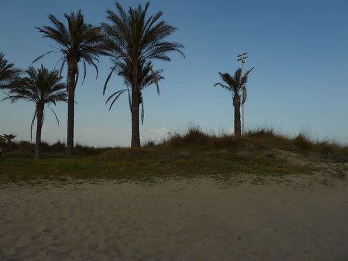 unes palmeres