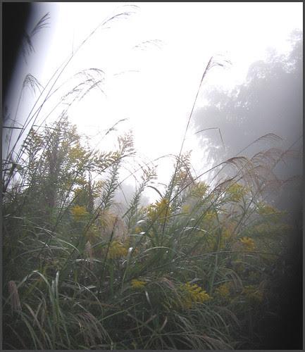 08 mist