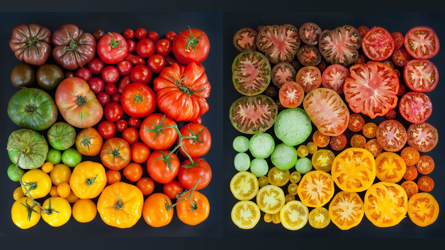 Photographers Perfect Arrangements Series Highlights Color and Simplicity