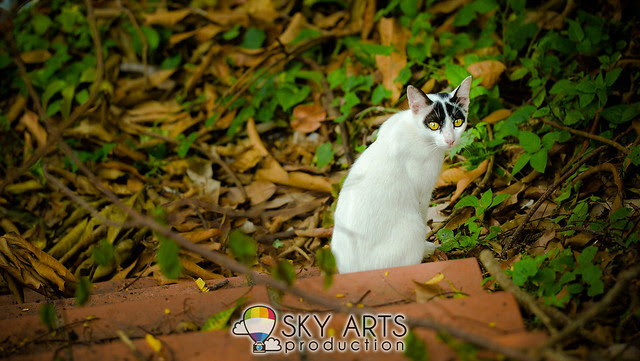 A mysterious cat staring at blank, but turn to me when it heard shutter sound. Love it's yellow eyes